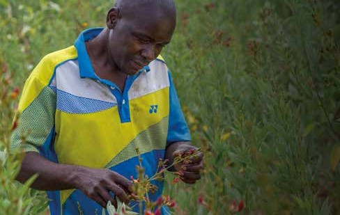 Christian Aid appeal to congregations over crop uncertainty