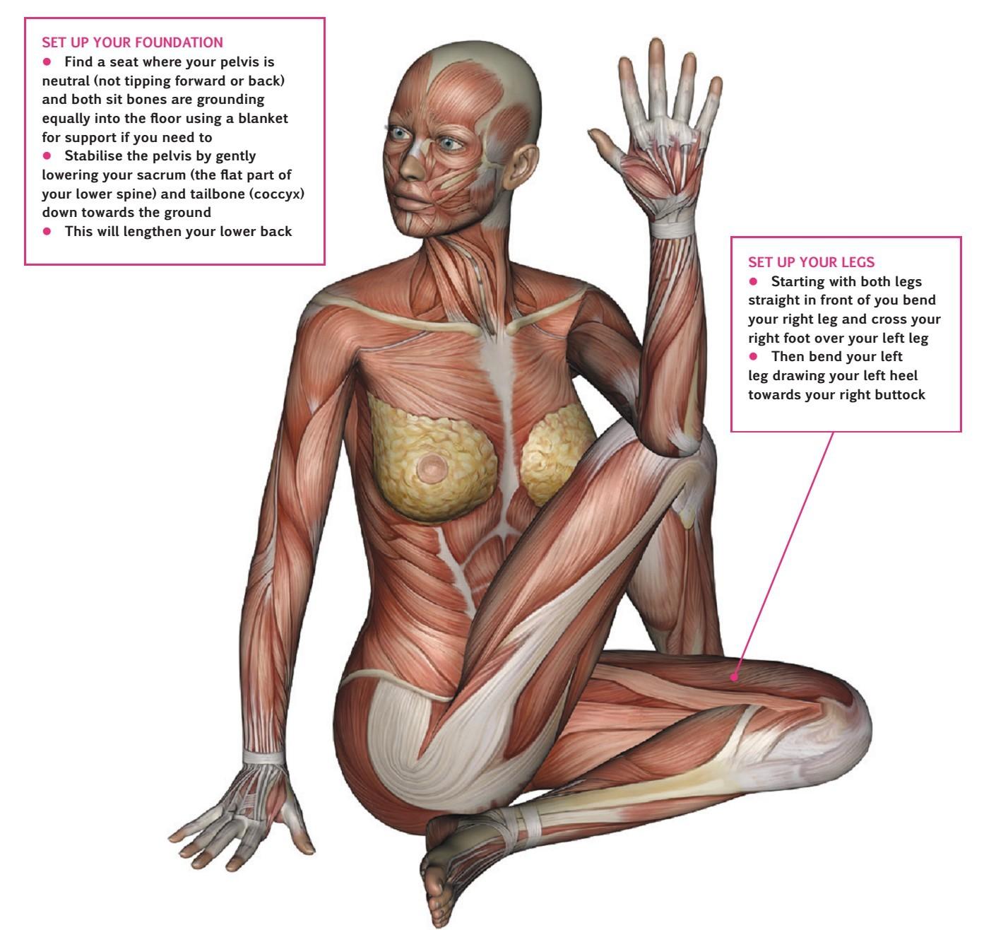 An overview of… Seated Twist (Ardha Matsyendrasana) | Pocketmags.com