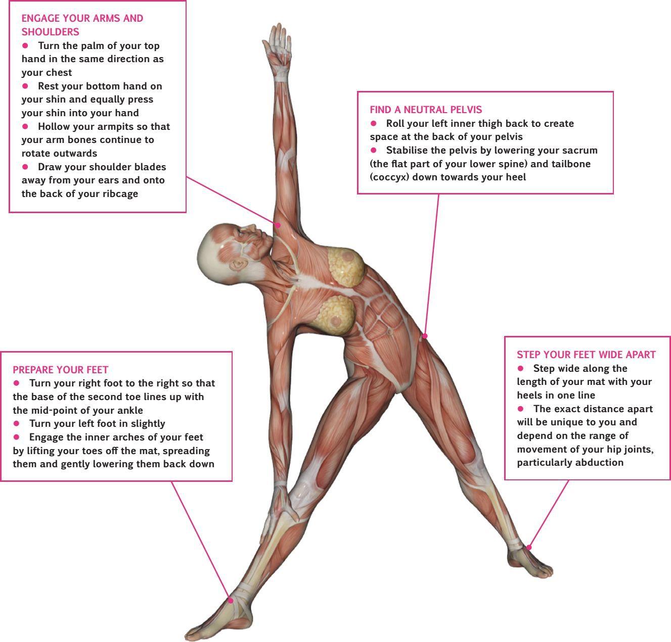 An overview of… Triangle Pose (Utthita Trikonasana) | Pocketmags.com