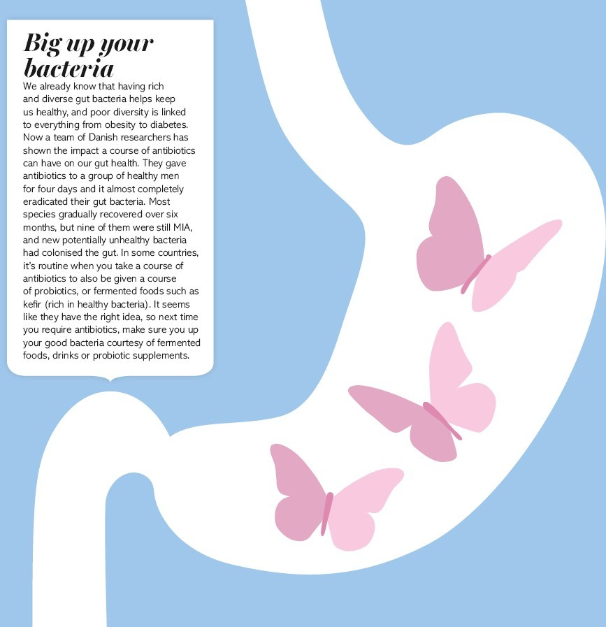 Gut Bacteria Might Guide Workings Of >> Guide To Your Gut Pocketmags Com